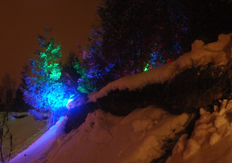Image of a forest illuminated with multicoloured LEDs